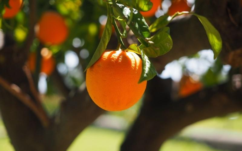 cítrico naranja